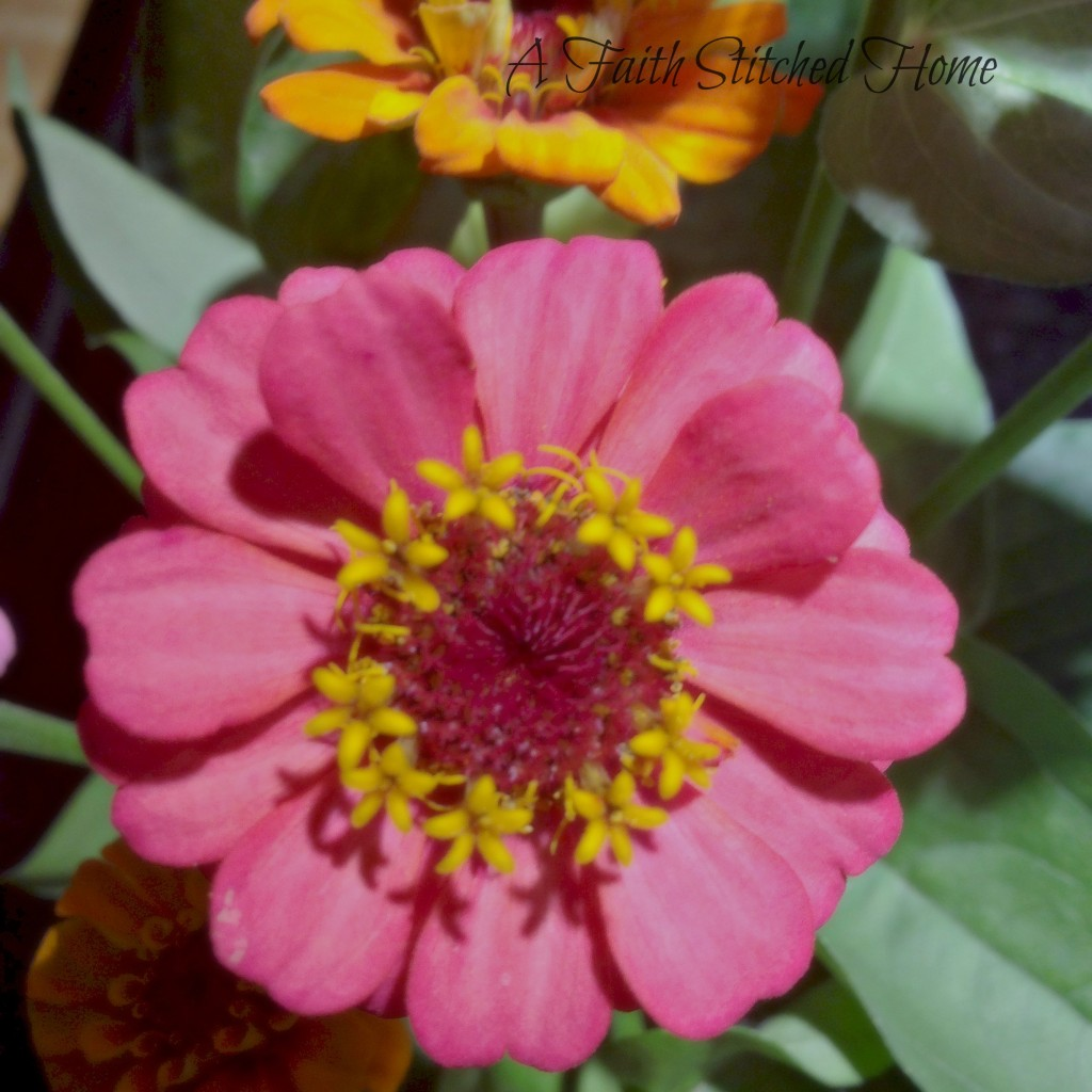 Pink Zinnia - FaithStitchedHome